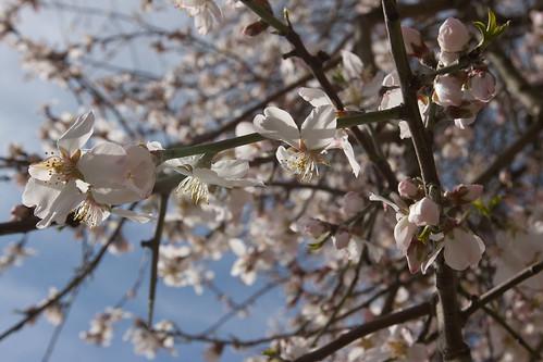 [59/365] Spring mood