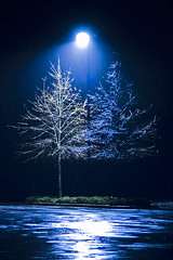 Rain and Trees (RMac_Photography) Tags: trees light reflection tree rain night wow d50 dark cool nikon artistic minimal rmac