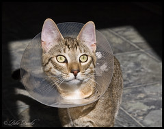 Not A Happy Camper (Peter Brake) Tags: twitch conehead denutted nolickylicky