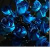 "Gracies - Gracias - Thanks - Vielen Dank - 75.000 Visitas. (Alicia Salvador ""Nube gris""""Ausente temporalmente"") Tags: barcelona flores thanks rosas dank azules grancias"