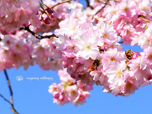 Ricoh_CX1_Sample_22 (by euyoung)