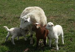 Raising triplets