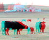 3D-04-08-09-0006abc new baby calves (jimf0390) Tags: house tree car animal rural cow stereoscopic stereophoto 3d spring farm rustic anaglyph iowa structure vehicle calf redcyan 3dimages anthon 3dphoto 3dphotos 3dpictures