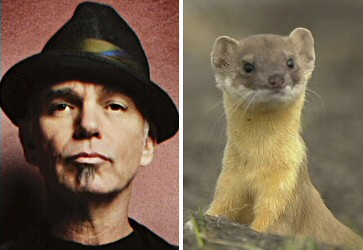 Billy Bob Thornton - Weasel
