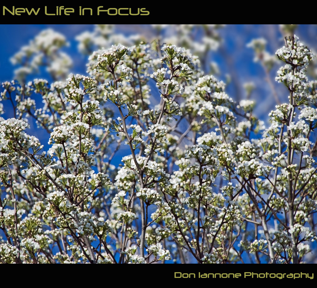 New Life in Focus