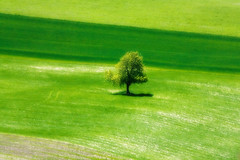 Forty Shades of Green (tochis) Tags: shadow tree green nature landscape countryside spring spain huesca alone outdoor stripes fields dreamy es minimalism lonelytree aragn serrablo 50faves 10faves 25faves omot platinumheartaward lrrede