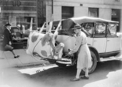 A papier-mache cow on Mrs Mellor's car, 1944 (Australian War Memorial collection) Tags: street two hat car cow women memorial war uniform australian caption papiermache 1944 australianwarmemorial mrsmellor milkacrossthecommons commons:event=commonground2009