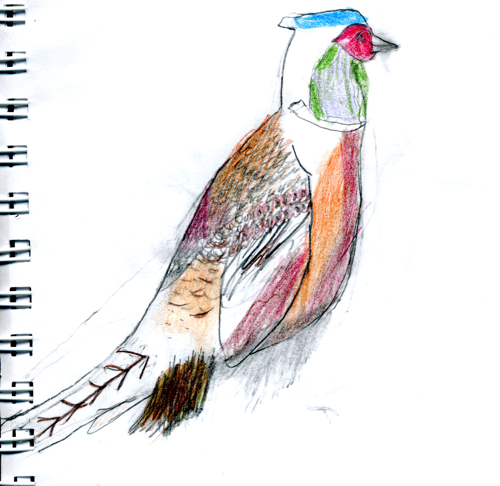 Ring-necked Pheasant by Zippy (age 9)