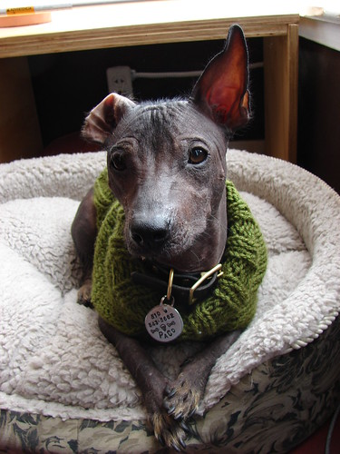nice ears