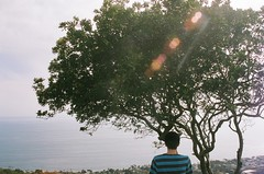 Ramzi (maryclaire roman) Tags: ocean tree stripes peaceful serene ramzi sunflare