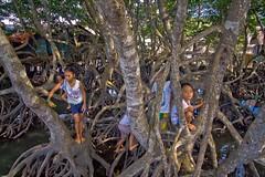 Mangrove Playground (julesnene) Tags: water children play philippines mangrove mangroves coron playgound luzon palawan kidsplay mangroveswamp mangroveforest canoneos50d northernpalawan julesnene juliasumangil calamianesgroupofislands