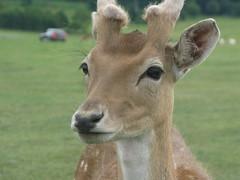 longleat zoo UK