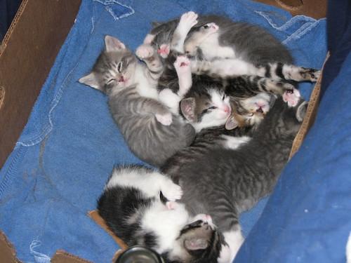Kittens 5-16-10 003