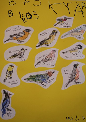 Backyard Bird Poster