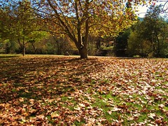 Autumn Grand (Sean of the Camera) Tags: autumn tree leaves bright victoria alpine centenarypark porepunkah