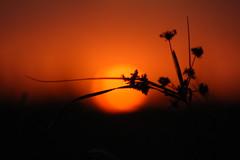 Pensando longe... (Eduardo Amorim) Tags: sunset brazil sun sol southamerica field brasil atardecer soleil tramonto sonnenuntergang prdosol campo pelotas sole sonne riograndedosul poniente champ anoitecer coucherdesoleil brsil entardecer crepsculo amricadosul poente amriquedusud sudamrica suramrica amricadelsur sdamerika costadoce americadelsud americameridionale auffangen eduardoamorim iayayam yamaiay