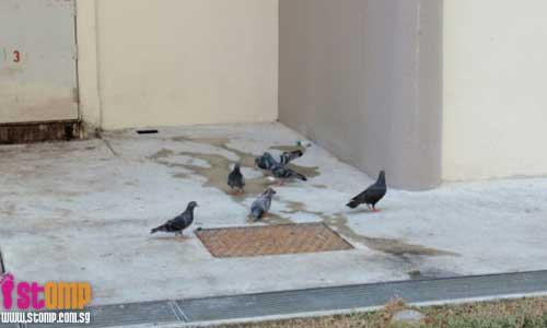 Bird droppings everywhere because of too many pigeons