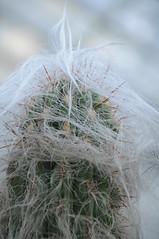 botanico 137 (blum1) Tags: cactus botanico ortobotanico