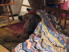 Dakota in her Blanket: Christmas 2007