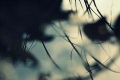 traum (westpark) Tags: winter light shadow reflection water grass leaves puddle licht blurry wasser dream shapes silhouettes outoffocus schemes gras bltter schatten unscharf reflektion traum formen verschwommen pftze hiddenface schemen verstecktesgesicht