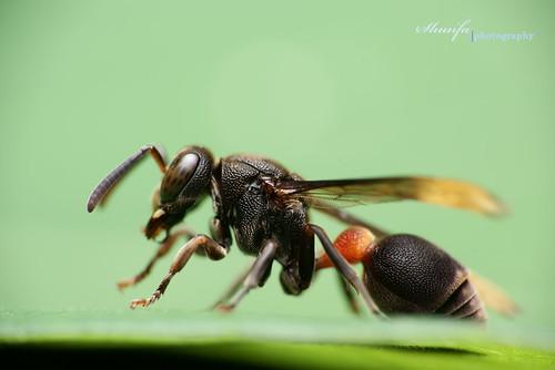 Feb-09 wasp