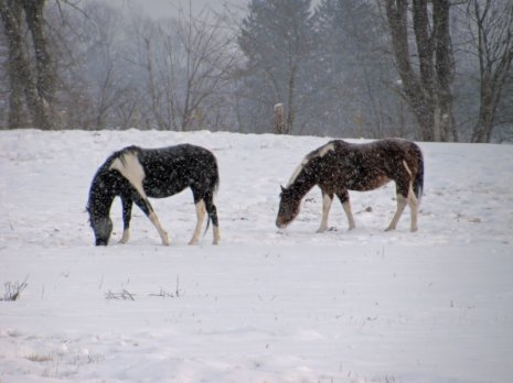 horses in the snow - photo by Adrienne in Ohio