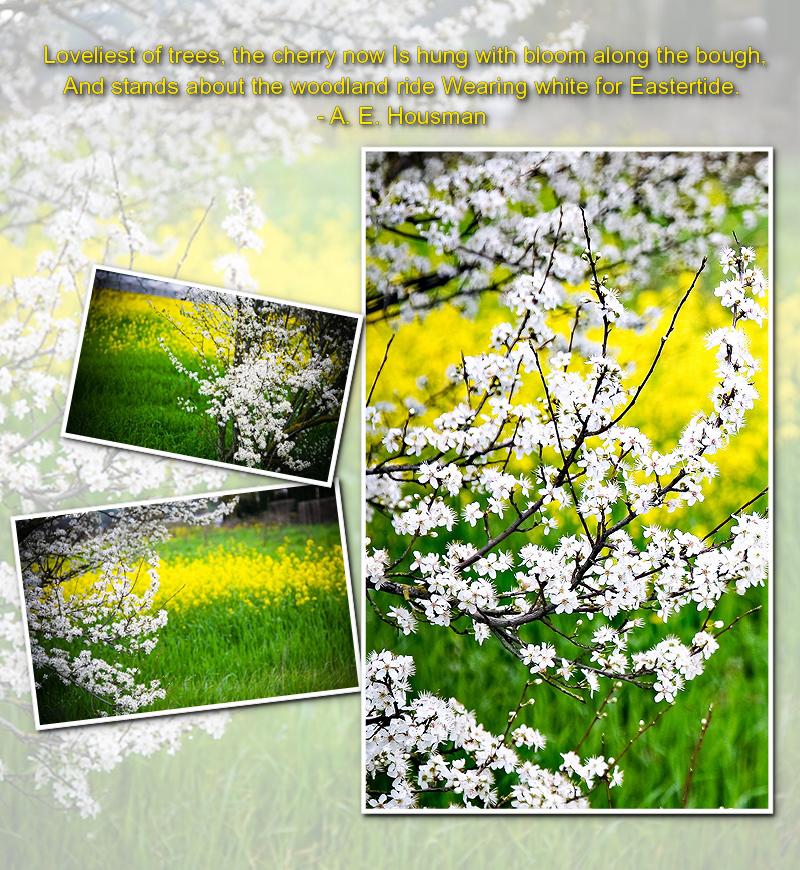 Blossoms & Mustard-000001