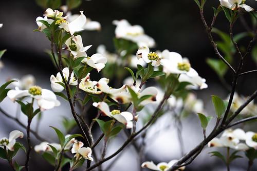 spring09 006