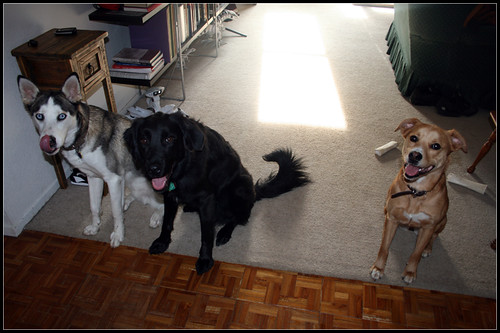 All 3 dogs
