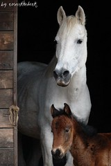 First Easter (roseinthedark) Tags: friends portrait horse love easter lumix mum manual mode foal fz50 motherlove platinumheartaward platinumheartawards alittlebeauty lovely~lovelyphoto saraandrosemary