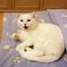 La gatta che rubò il letto al padrone