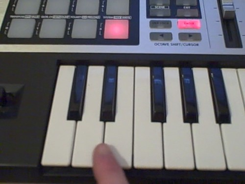 Bunny on keyboards