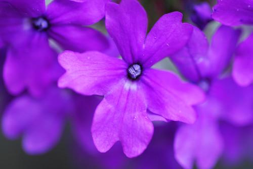 SS18_bright_purple[2009]