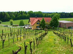Weingut Ploder-Rosenberg, Süd-Oststeiermark