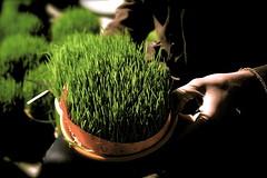 Tranquility (mohammadali) Tags: life city winter vacation green grass canon eos rebel persian iran 1987 tranquility tehran  2009  noroz nouroz xti 400d