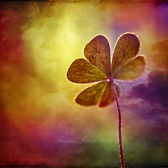 Amidst the Rainbow (Tanjica Perovic) Tags: pink light sky plant postprocessed macro art texture nature colors backlight clouds manipulated square photography colours fotograf photographer purple emotion artistic sensitive edited dream luck lucky imagination dreamy layers backlit colourful clover delicate oxalis tender dreamcatcher sensibility  srpski fotografija mywinners abigfave  artlibre memoriesbook  theunforgettablepictures oxalidacea saariysqualitypictures treefoliateplant  tanjicaperovicphotography