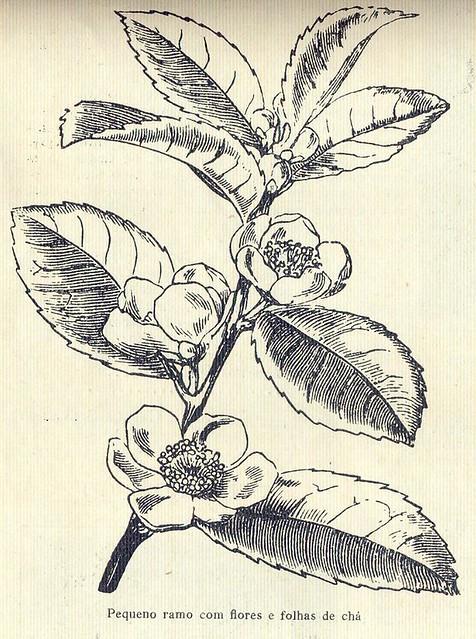 Ilustração, No. 6, March 16 1926 - 19a