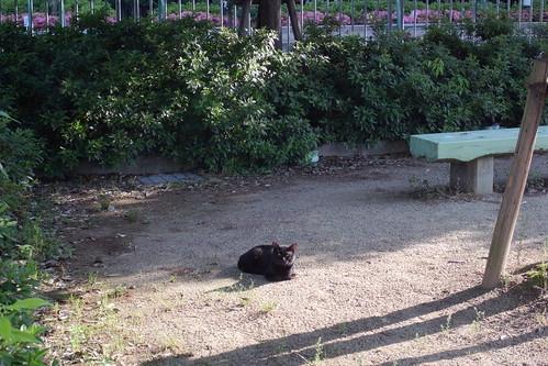 Today's Cat@20090601