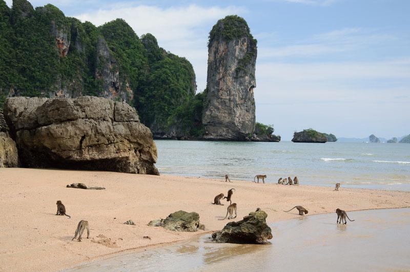 фото запрещенного на пляже
