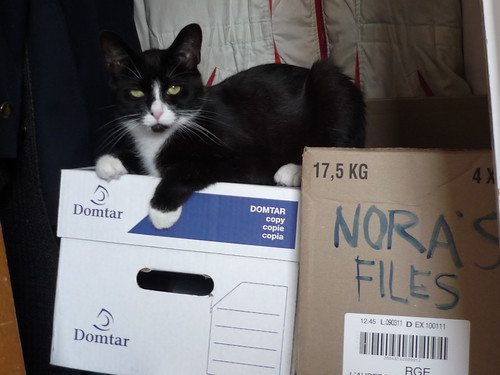 Nora the File Cat