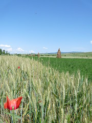 Romanian Landscape (perspective-OL) Tags: sky flower june landscape corn europe grain meadow romania 2009 romanian