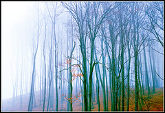 Wald im Nebel (helmut_albin_ebner) Tags: nebel herbst wald niedersterreich herbstwald wienerwald herbstimpression waldstimmung nebelstimmung