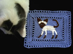 Siamese cat pillow top