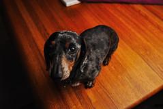 The Dark Side (B-A-R (burnafterreading)) Tags: lighting dog delete10 delete9 delete5 delete2 wanda nikon delete6 delete7 sb600 delete8 delete3 delete delete4 delete11 wescott d90 delete12 strobism