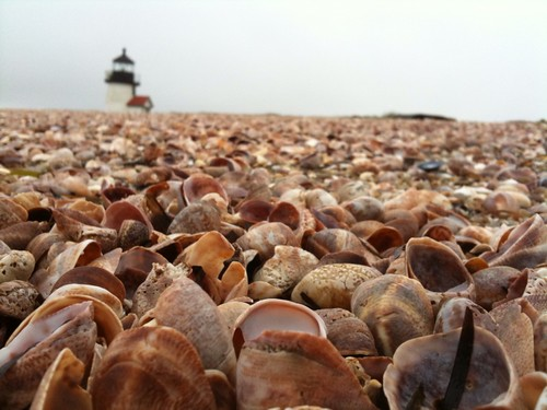 Brant Point Lighthouse and Sea Shells