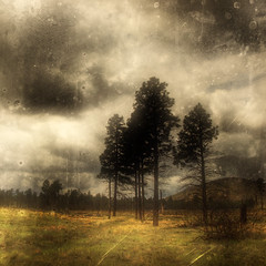 Black Pines (Eric Vondy) Tags: storm black field clouds forest dark fire scary haunted pines paranoid superaplus aplusphoto saariysqualitypictures magiayfotografia thelittlebookoftreasures