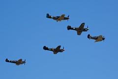 WW2 Fighter Aircraft (andrew.nilsson) Tags: spitfire boomerang kittyhawk p51 tamora p40 tyabb canonef70200mmf4lis
