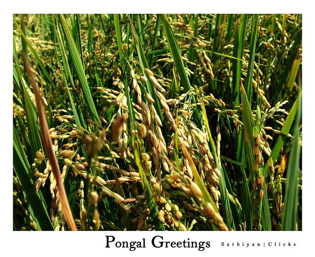 : Pongal Valthukkal | Pongal Valthu | Pongal Vazhthukkal | Pongal ...