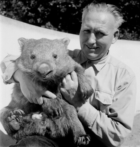 Jaap Velthuis , 40 jaar oppasser in Artis (Jaap Velthuis, 40 years zoo keeper (with a wombat)), 1959