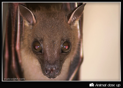Face to face with Mr Bat picture